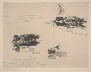 Untitled (Ducks)