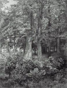 Corner of the Woods