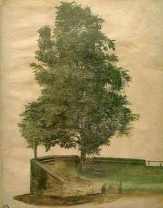 Linden Tree on a Bastion