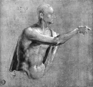 Male Nude, Half-length