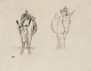 Etudes d'ânes