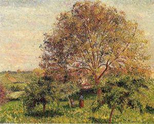 Walnut Tree in Spring