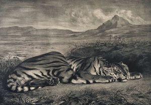 le tigre royale