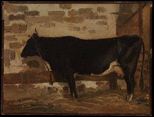 Vache dans un Stable