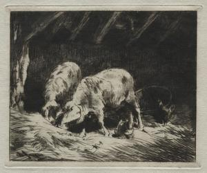 Two Porcs