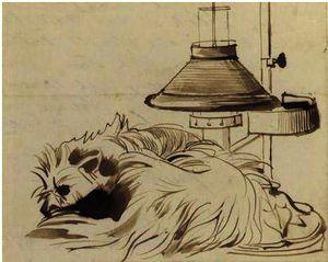 A Dog Asleep Beside A Reading Lamp