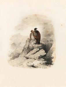 A Pair Of Birds Of Prey On A Rocky Outcrop