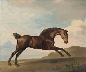 A bay hunter galloping in a mountainous landscape