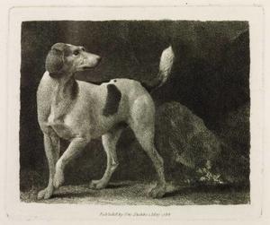 A Foxhound