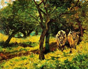 Oxen in an olive grove