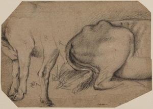 Studies of a calf