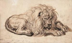 A lion at rest