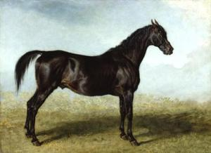 Guy Mannering. A Race Horse