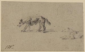Study of two dogs