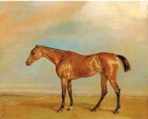 The Marquess of Exeter's Augusta, at Newmarket