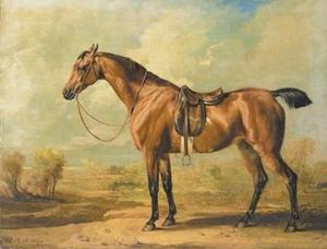 Wasp, a saddled bay hunter, in a landscape