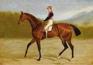 A bay racehorse with jockey up