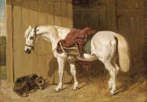 A grey pony with a dog by a stable door