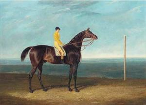 ack Spigot, a dark bay racehorse with jockey up