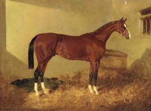 Aristides, a bay colt, in a loosebox