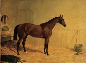 Cotherstone, a bay racehorse in a stable