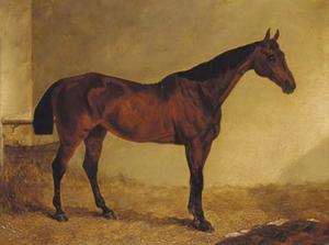 Gypsy, a bay horse in a stable