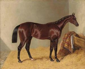 Mango, winner of the 1837 St. Leger Stakes, in a stable