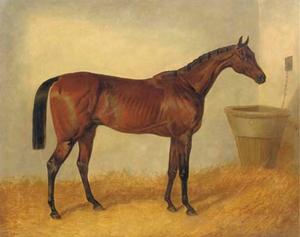 Merry Monarch, a bay mare, in a stable