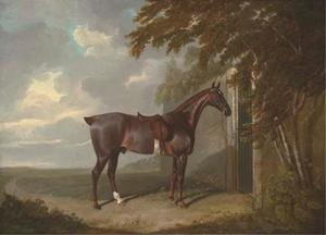 Mr. H.M. Greaves's liver chestnut hunter, tethered to a gate at Page Hall, Yorkshire