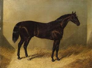 The Saddler, a dark bay racehorse, in a stable