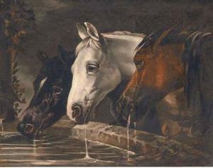 Three horses at a water trough
