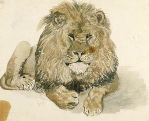 A lion at the Exeter