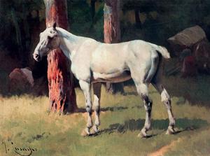 Dapple-Bay Horse