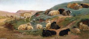 Sheep in a Mountainous Landscape