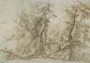 Homme tenant un livre dans un bois recouvert de troncs morts