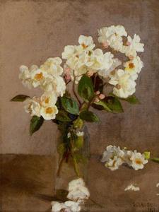 小 白 玫瑰