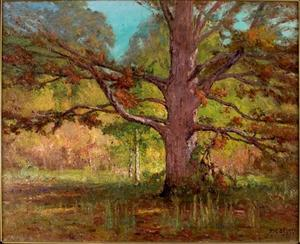 The Old Oak (Big Oak)