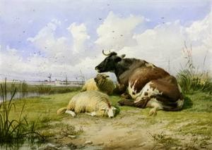 A Cow and Two Sheep