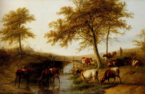 Cattle Resting By A Brook