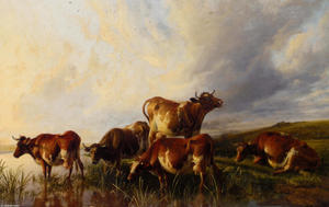 Cattle Wattering