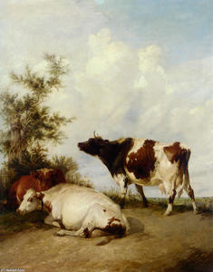 Cows in a Meadow