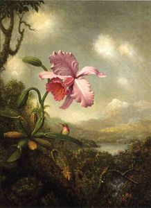 Hummingbird and Orchid: Sun Breaking Through the Clouds