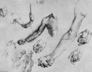 Study of male hands and arms