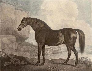Marske Horse