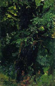 Oak trunk in early summer