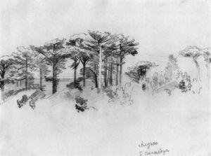 Pine trees over the sea. Alupka