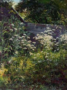 Corner of overgrown garden. Goutweed-grass