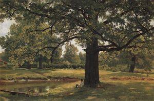 Oaks in Old Peterhof