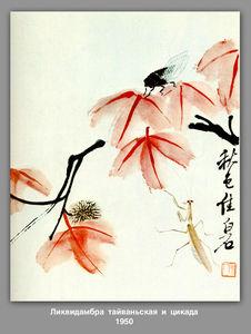 Likvidambra Taiwan and the cicada