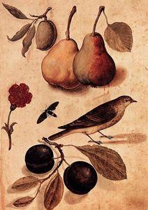 Specimens of Nature
